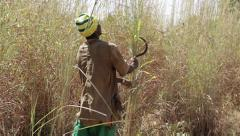 Africa - farmer cuts tall grass - Mali - stock footage