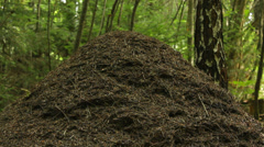 Big anthill in natural environment, forest - stock footage