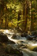Meandering brook in the dense forest - stock photo