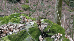 Forest Floor Moss Covered Rocks HD Stock Footage