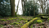 Stock Video Footage of Moss covered fallen logs in the woods (dolly)