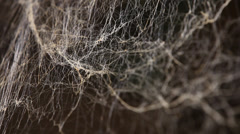 Closeup shot of Spider web Stock Footage