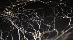Halloween Scary Spiderweb Stock Footage