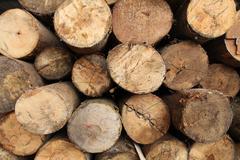 Log wood texture backgrounds Stock Photos