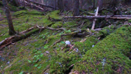 Stock Video Footage of Glacier National Park Woodland