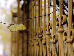 Autumn leaf with wrought iron fence Stock Photos