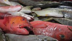 Fish Market in Jimbaran, Bali Stock Footage