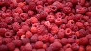 Stock Video Footage of Raspberry fruits background
