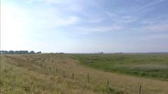 Sheep grazing at sea dike + pan estuarine marshes + pan industrial area Stock Footage