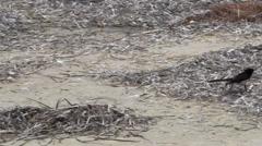 Little bird walking on the beach in slow motion Stock Footage