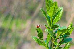 Ladybug on a green leaf on natural background Stock Photos