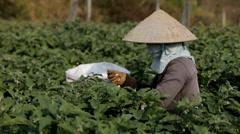 Woman Picks Vegetables in Vietnam Stock Footage
