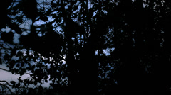 Camera moves out of dark wooded area (tint) Stock Footage