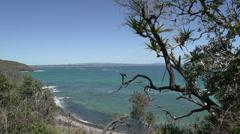 Coastal walk in Noosa National Park, Queensland, Australia Stock Footage