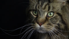 A Brave Cat looks someone with very deep Stock Footage
