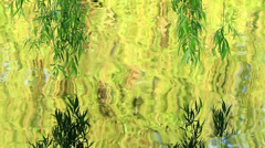 Willow tree reflection Stock Footage