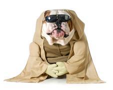 dog wisdom - stock photo
