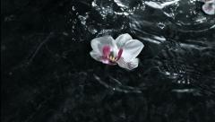 Flower falling over waterfall, Slow Motion Stock Footage