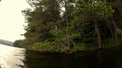 Stock Video Footage of Movement in the lake, huge pine trees overhanging along the coast