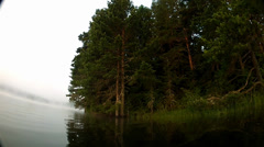 Movement in the lake, huge pine trees overhanging along the coast - stock footage
