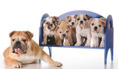 dog family - stock photo