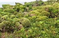 Stock Photo of vegetation at seven islands