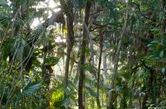 View of sub tropical forest Stock Photos
