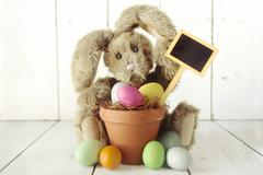 Easter bunny themed holiday occasion image Stock Photos