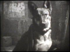 1890 Old dog Stock Footage