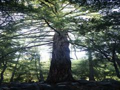 4K Forest Sunlight LM01V HDR Timelapse Pine Trees Vertical Stock Footage