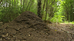 Big anthill from the side in natural environment Stock Footage