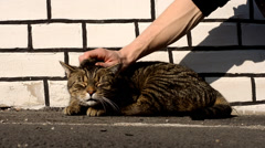 Happy cat feels pleasure while being stroked man Stock Footage