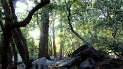 4K Forest Sunlight LM08 Timelapse Zoom In Pine Trees Stock Footage