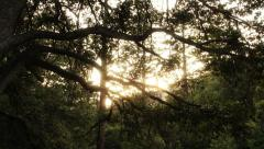 4K Forest Sunlight LM09 Timelapse Pine Trees Sunset Stock Footage