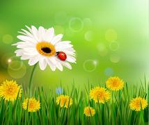 Summer nature background with ladybug on white flower. vector. Stock Illustration