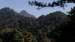 Pine Forest Hills in Vietnam Stock Footage