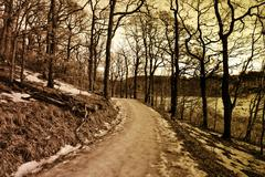 Small road in a wintry forest Stock Photos