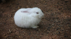 White Rabbit in zoo Stock Footage