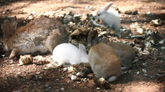 Rabbit couple in zoo Stock Footage