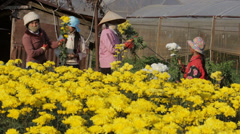 Day Workers work on Flower Farm Stock Footage