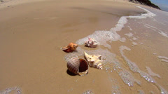 Shells Wash Away Stock Footage