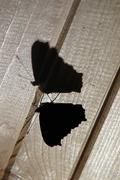 Butterfly's silhouette - stock photo