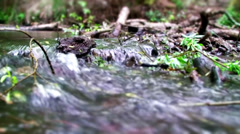 Closeup of a Forest Stream Stock Footage