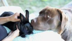 Woman holding and petting a black rabbit Stock Footage