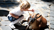 Stock Video Footage of Sweet little girl in the zoo with goats
