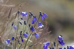 Stock Photo of Purple flowers