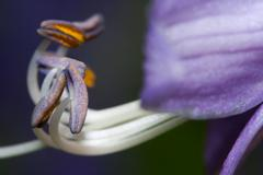Purple and white stamen Stock Photos