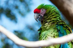 green macaw perched on a tree - stock photo