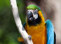 Blue and yellow macaw perched on a tree Stock Photos