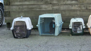 Stock Video Footage of Cats in box crates, exterior shot.